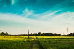 The path to the field. In the evening with blue sky background Royalty Free Stock Photo