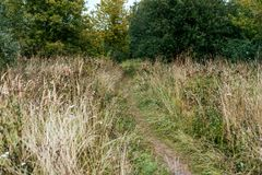 A path to forest, bushes with trees, autumn day in the nature in the park, a roadside with green spikelets of grass. Stock Images