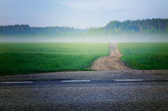 Path to forest. Path through field leading to forest at misty night or evening Stock Photo