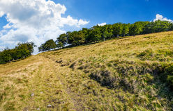 Path to the forest through mountain meadow Stock Photography