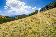 Path to the forest through mountain meadow Royalty Free Stock Images