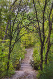Path to Greenery. Pathway along the Spencer Gorge Royalty Free Stock Photos
