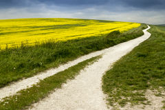 Path to happiness. White chalk path meanders into the distance alongside a field of vibrant rapeseed Royalty Free Stock Photos