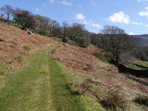 Path to Johnny Wood near Seatoller, Lake District Royalty Free Stock Photography