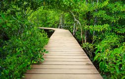 Path to the jungle Stock Photography