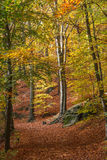 Path to Koenigstein & x28;Konigstein& x29; fortress through the forest. Saxony, Germany Stock Images