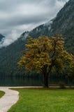 Path to Konigssee lake Royalty Free Stock Image