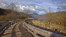 Path to the lake near mt. St. Helen's. Royalty Free Stock Photo