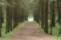 A path to the light. A forest alley. For a soft and mystical effect used Gaussian blur Royalty Free Stock Photos