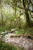 Path to Manchu Picchu. This image shows the pathway up to Manchu Picchu, Peru Royalty Free Stock Photos