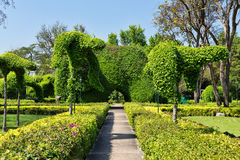 Path to the manicured bushes. Path to the manicured bushes, landscaping Royalty Free Stock Image