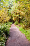 Path to Marymere Falls. In the Olympic Peninsula, WA state Stock Photography
