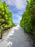 Path to the Miami Beach Royalty Free Stock Images