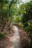 Path to the mountain top Stock Photography