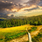 Path to mountains at sunset. Path with a wooden bridge near the lawn in the shade of pine trees of green forest in mountain at sunset Royalty Free Stock Photography