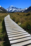 Path to Mt Cook. Wooden Path leading to Mount Cook, New Zealand Stock Images