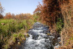 A path to nature. Dan river reservation in Galil Israel Royalty Free Stock Image