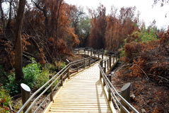 A path to nature. Dan river reservation in Galil Israel, a path to the long hiking road Stock Photography