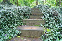 Free Path To Nature Forest Royalty Free Stock Image - 34718546