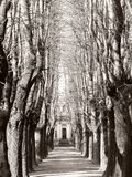 Trees frame in Milan`s Cemetery royalty free stock image