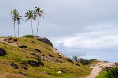 Path to the Palm Trees. A deserted path leads to a hilltop summit Stock Photos