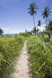 Path to the palms in an isle of cambodia Stock Images