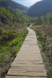 Path to Preikestolen Royalty Free Stock Photography