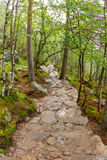 Path to the Pulpit Rock, Norway. Path to the Pulpit Rock in Norway Stock Photo