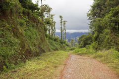 Path to the rainforest Royalty Free Stock Images