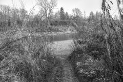 The path to the river Royalty Free Stock Photo
