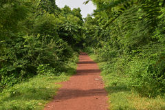 Path to rural Bengal. This is a typical path of rural Bengal. It is really enjoying to ride through this red colored moram road under the canopies of trees Stock Photo