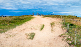 Path to sand beach with beachgrass. Way to the wide sandy beache Royalty Free Stock Images