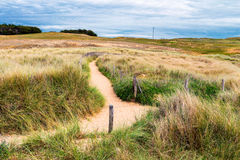 Path to sand beach with beachgrass. Way to the wide sandy beache Royalty Free Stock Photo
