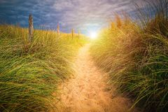 Path to sand beach with beachgrass. Way to the wide sandy beache Royalty Free Stock Image