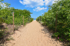 Path to sandy beach by Baltic sea Stock Photography