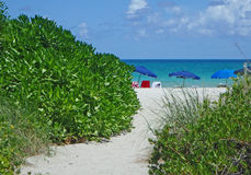 Path to the sea on umbrella lined Miami Beach Stock Image