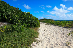 Path to the sea of white sand. Atlantic Ocean. Cayo Guillermo. Cuba Stock Photography