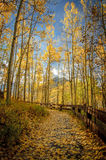 Path to Silver Jack Reservoir 1. Foot path covered in yellow aspen leaves above Silver Jack Reservoir in fall Royalty Free Stock Photo