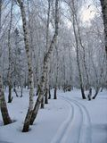 Path to the snow-covered winter forest Stock Image