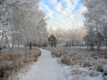 Path to the snow-covered winter park. Frosty trees Stock Photo