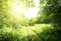 Path to the sun in forest Stock Images