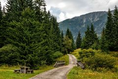 Free Path To The Mountains Through The Forest In The Czech Republic. Beautiful Panoramic Nature In The Mountains, A Miracle Of Nature. Stock Photos - 137410153