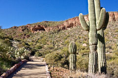 Path To Tonto National Monument Royalty Free Stock Image