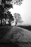 Path to the tree Royalty Free Stock Photos