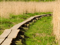 Path to Unknown. A path in the bulrush leading to the unknown Royalty Free Stock Photography