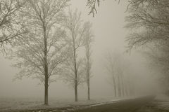 Path to unknown. Country road with trees covered in frost in a foggy day royalty free stock photo