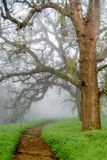 Path to the unknown. A foggy path in the woods of Northern California, in the winter, displaying leafless oak trees and green grass, and unclear way ahead Stock Images
