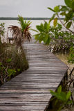 Path to the water Stock Photography