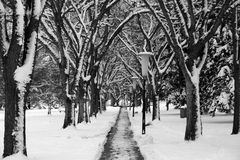 Path to Winter Royalty Free Stock Photography