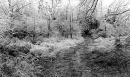 The Path to Winter Royalty Free Stock Photo